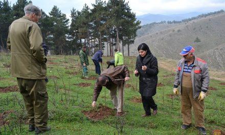 Во акцијата Ден на дрвото – пошумени 4 хектари во Кочанско