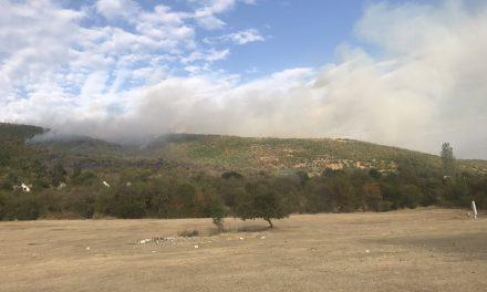 Локализиран шумскиот пожар кај Пантелеј