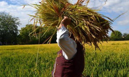 """""""Денови на кочанскиот ориз"""" – од 30 септември до 5 октомври 2019 година"""