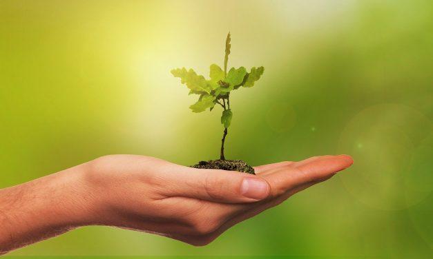 ЈАВЕН ПОВИК за засадување на садници на подрачјето на Кочани