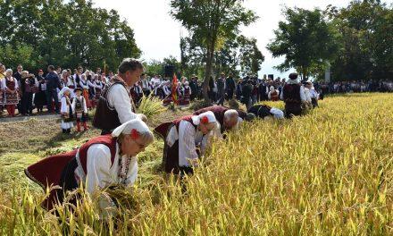 """На 3 октомври – """"Деновите на кочанскиот ориз"""" во скратено издание"""