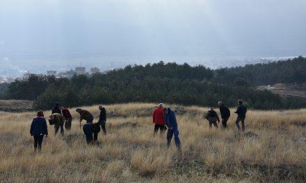 Нови насади од бор и багрем во месноста Пресечена Скала – реализирана акцијата за пошумување од Општина Кочани