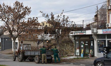 """Дрворедите во Кочани – под стручен надзор на КЈП """"Водовод"""""""