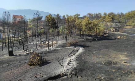 Пожарот целосно е локализиран, хеликоптерите гасат во планинскиот дел од Кочанско